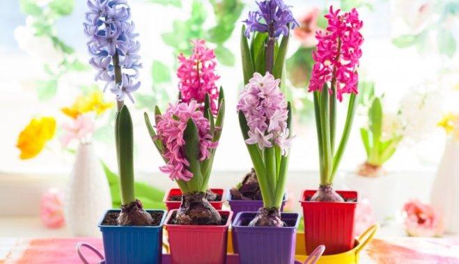 5 растений, которые порадуют вас, когда они уже отцвели