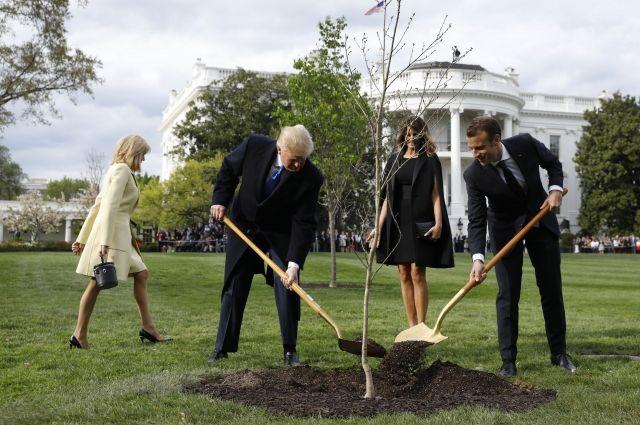 Трамп и Макрон «посадили» дуб перед Белым домом