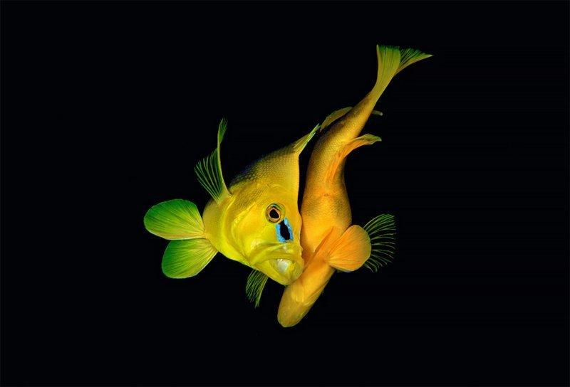 """Красота изгибов"", Александр Мустард Wildlife Photographer of the Year, животные, конкурс, мир, под водой, природа, фотография, фотомир"