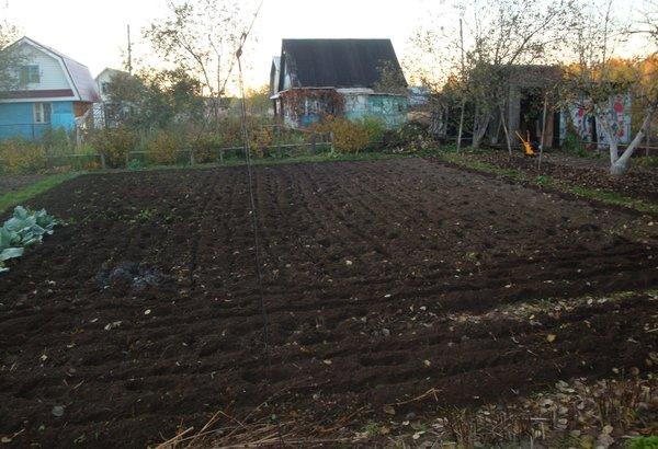 Не оставляйте почву голой   Сад-огород