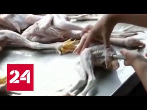 Волшебный укол: из потасканных цыплят продавцы делают качков
