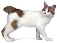 КОШКИН ДОМ. Наиболее распространенные мутации у кошек