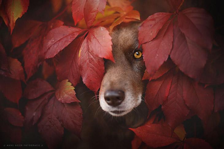 Осенние собаки
