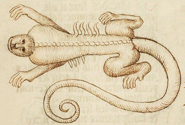 Несколько странных особенностей животных, в которые раньше верили люди. Часть 2