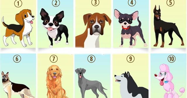 Тест: узнайте, что о вас может рассказать ваша любимая порода собак