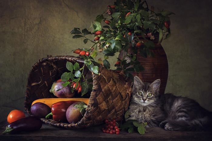НАТЮРМОРТ С КОШКАМИ. ФОТОГРАФ IRINA PRIKHODKO