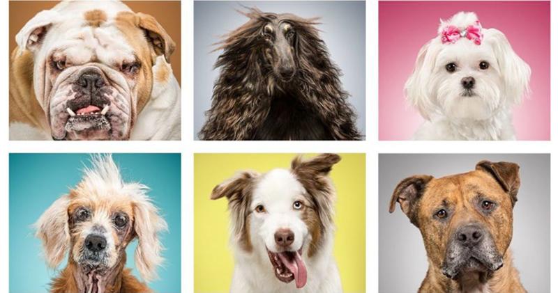 Фотопроект о жизни собак ряд…