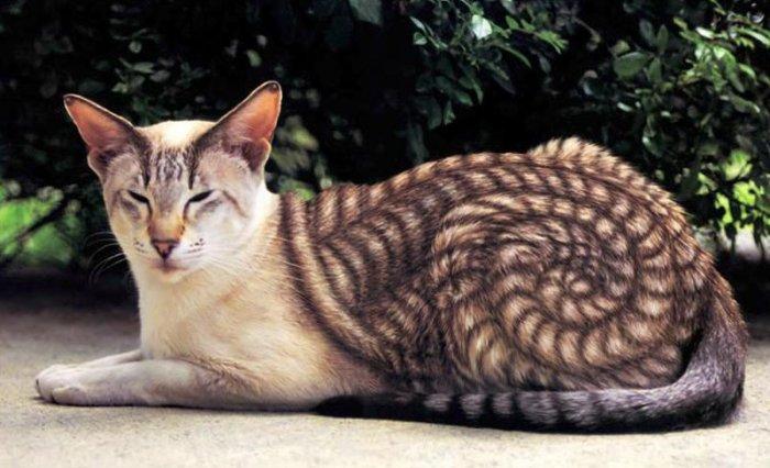30 животных, которых природа…