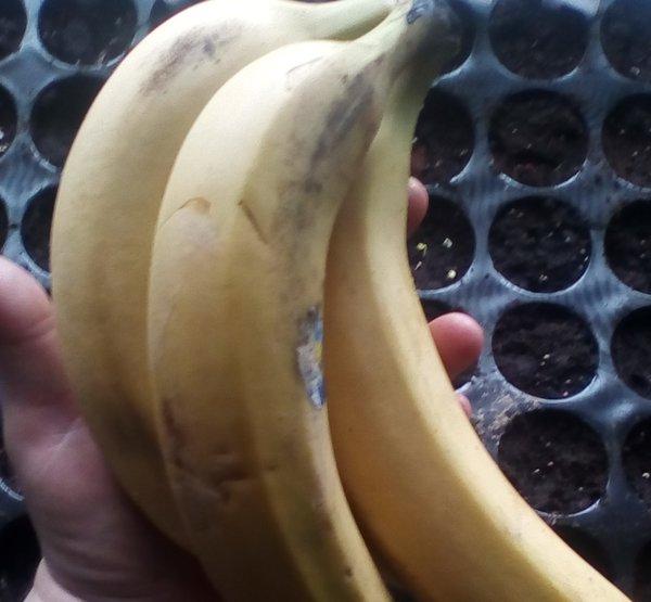 Готовим банановую подкормку …