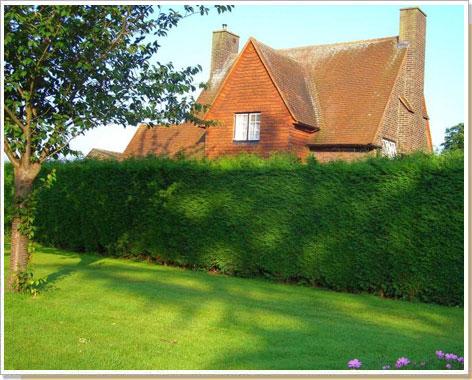 """Переезд сайта """"Дом моей мечты"""" - Живая изгородь: альтернатива крепостным стенам"""