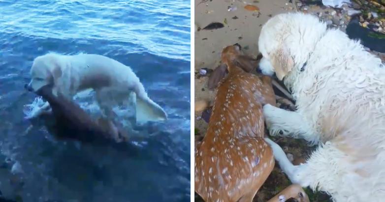 Как пёс оленёнка спас