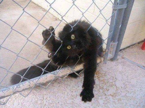 Забавные кошки, попавшие в неловкую ситуацию