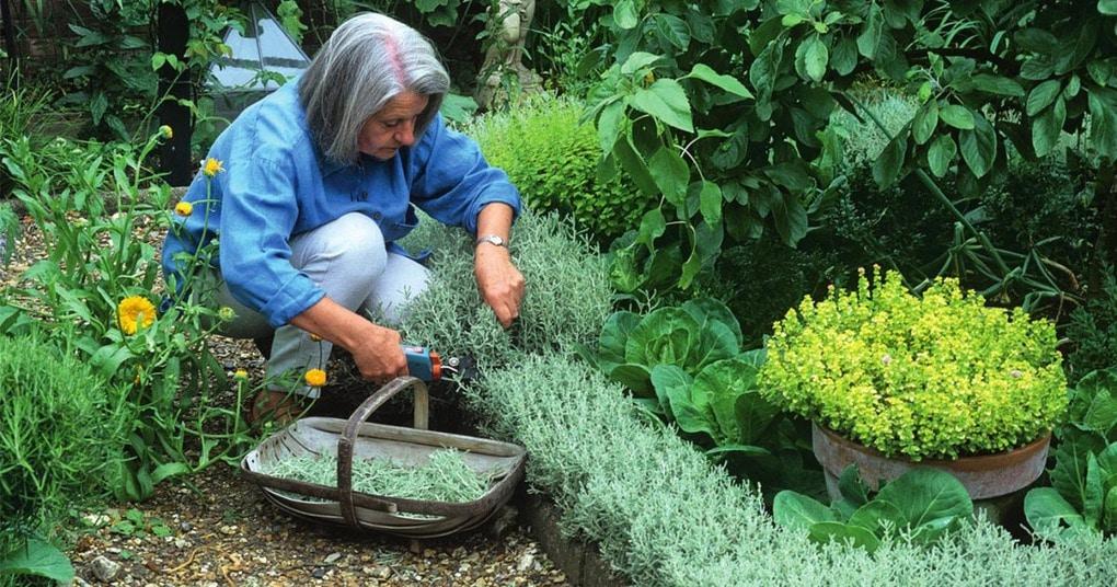 Ароматный бордюр на участке из пряных трав — идеи посадки