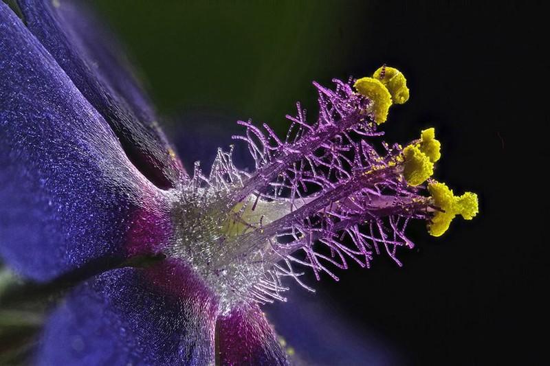 9. Восьмое место: тычинки полевого цветка nikon, конкурс, красота, фото