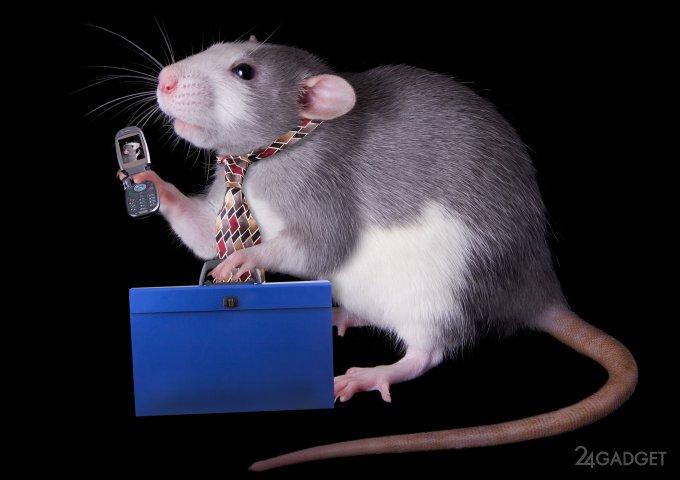 Крысам не рекомендуется поль…