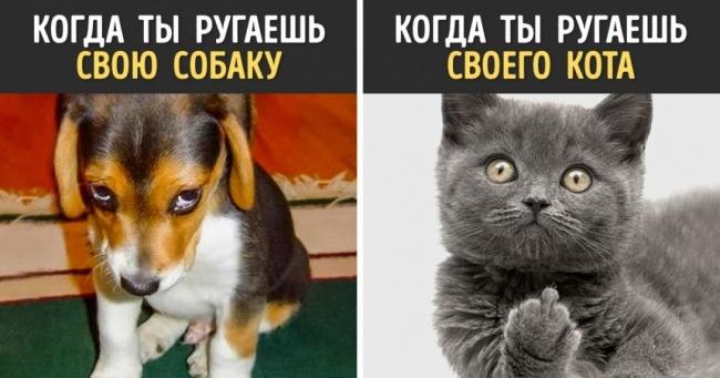 12 доказательств того, что собаки и кошки — с разных планет!