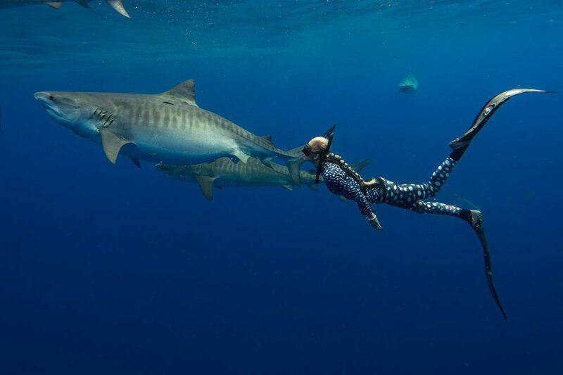 Уникальные фото огромной белой акулы