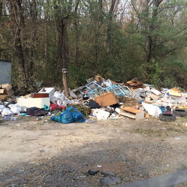 Из городского леса оперативно вывезли мусор после сообщения ростовчанина в сервис «Благоустройство города»