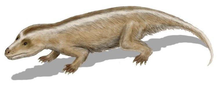 Самые первые млекопитающие