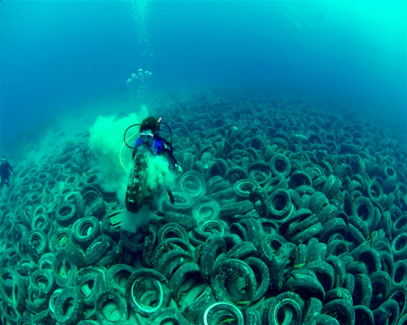 destruction of marine life essay Marine biodiversity wiki support a high diversity of marine life and are threatened by habitat destruction and fragmentation is a process that describes the.