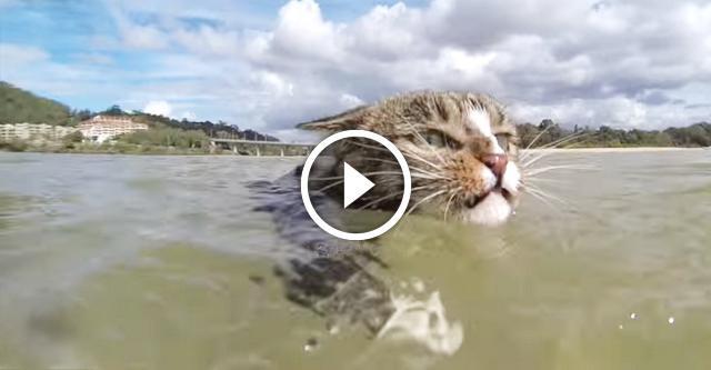 Диджа — интернет-знаменитость и самая умная кошка в мире