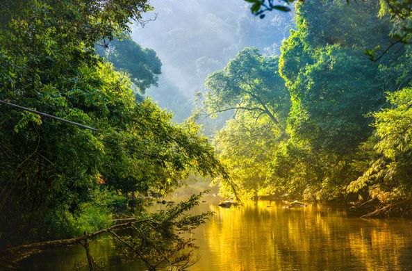 Леса Амазонки оказались способны сами создавать дождь