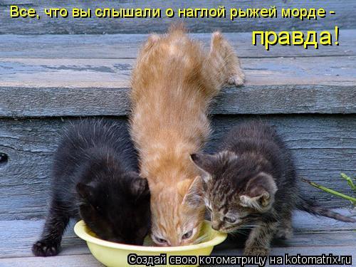 Самый жадный в мире кот, про…