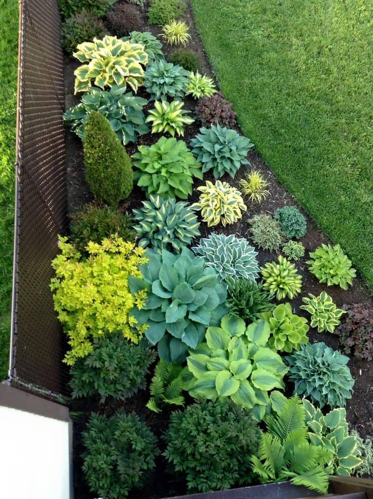 Удачное расположение клумбы с красивыми многолетними растениями