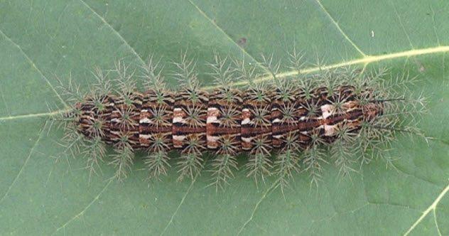 Несколько самых страшных и ядовитых насекомых в мире. Часть 1