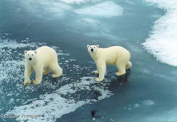 Ледяная шапка Земли достигла минимального размера