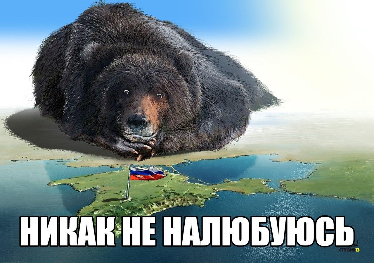 Мишка смотрит на русский фла…