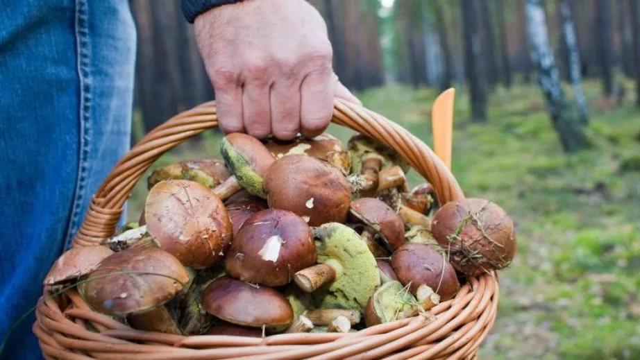 Граждане, собирающие грибы на продажу, должны платить за аренду леса