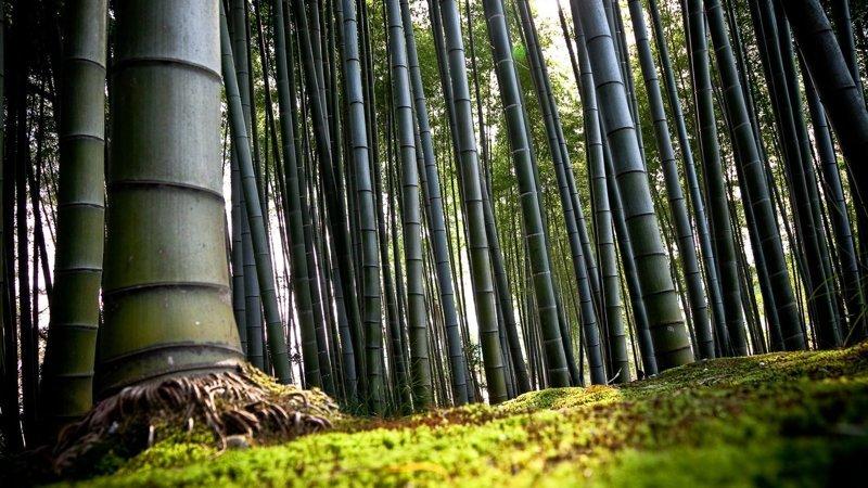 Лощина чёрного бамбука — Китай Бермудский треугольник, Странные места, необъяснимое