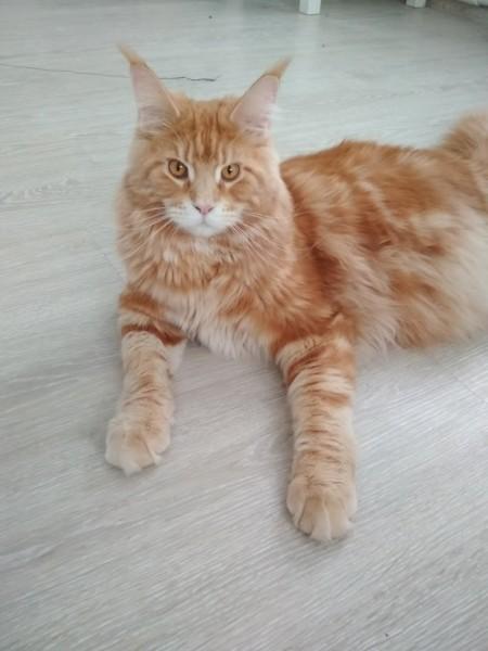 Про кота =)