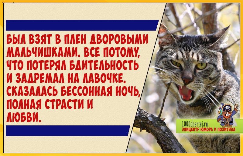 Дневник дворового кота. Часть 1