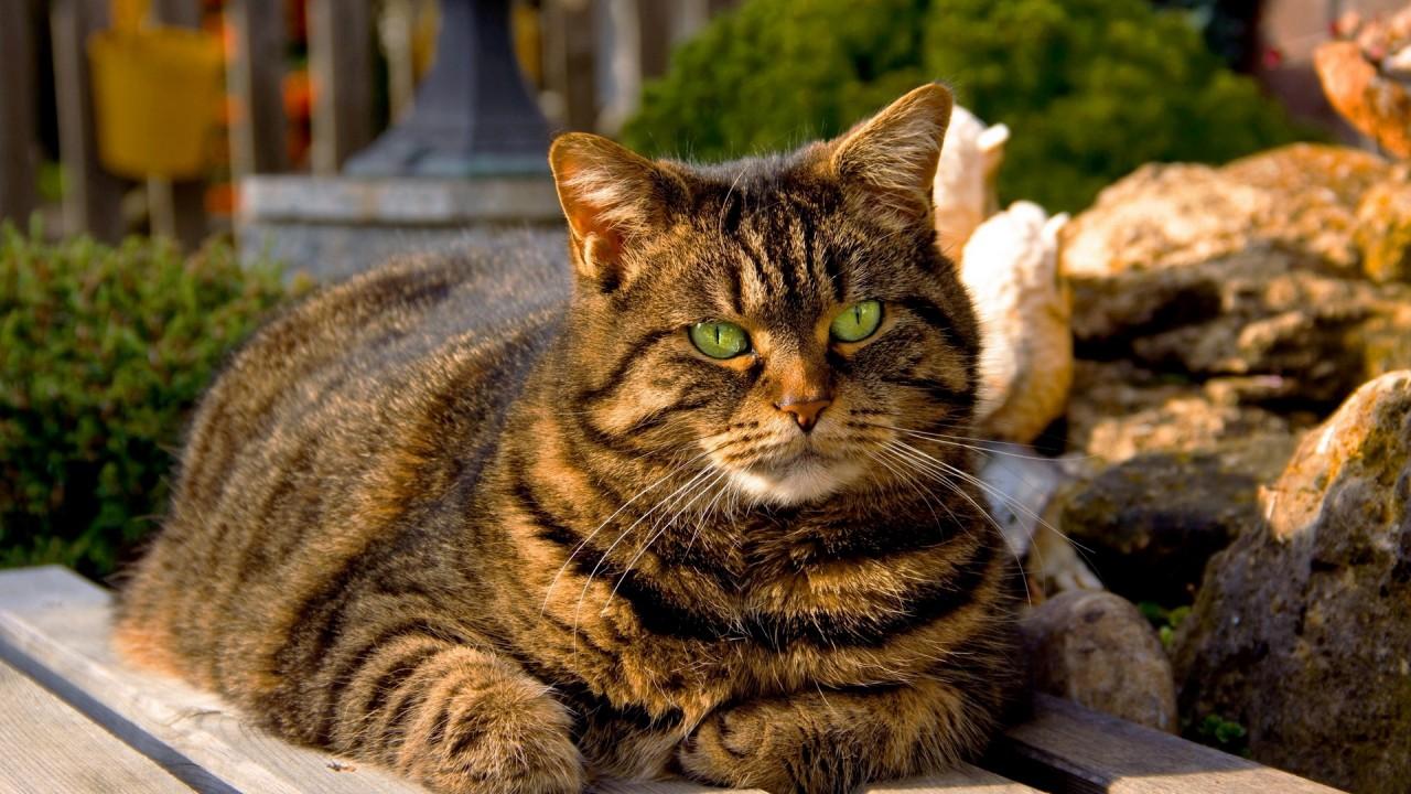 Коты - пумпыши)