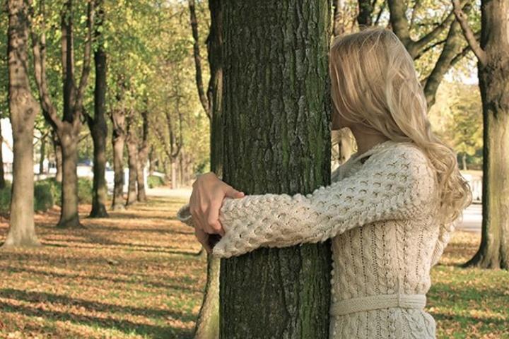 Как деревья нас лечат? Полезные добавки в чай