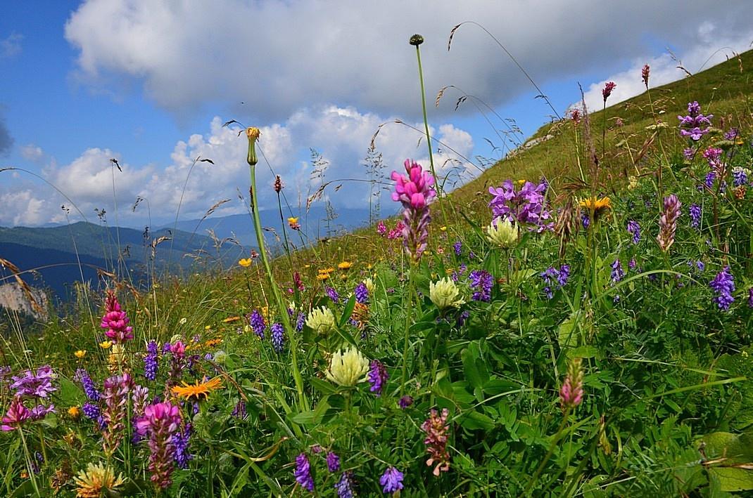 Цветущие альпийские луга