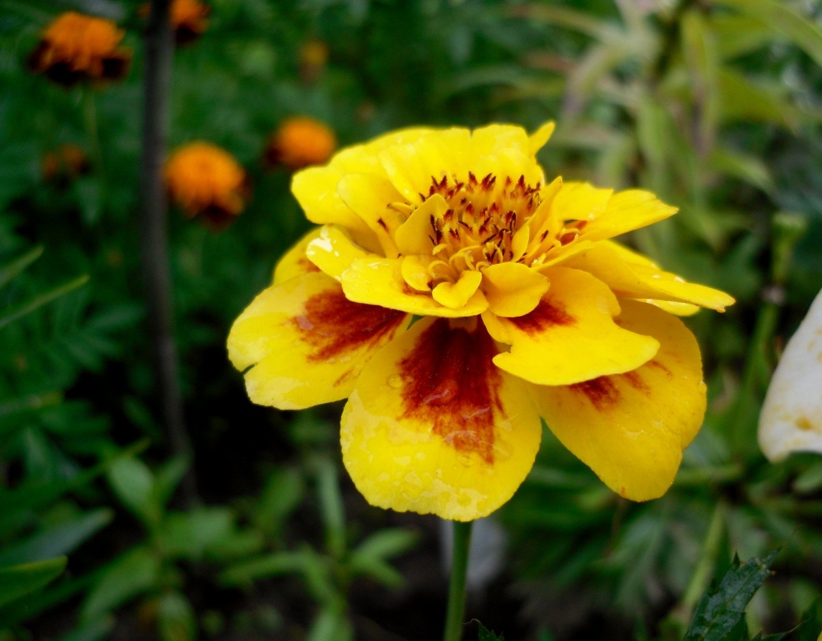 Фото в цветах: желтый, черный, темно-зеленый, бежевый. Фото в стиле кантри.