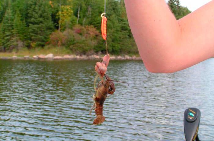 на что ловить рака на озере