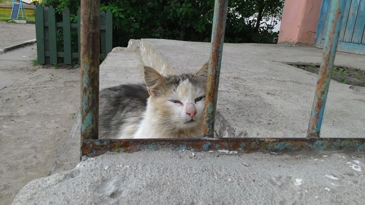 Братья наши меньшие: кошка, которая гуляет сама по себе?