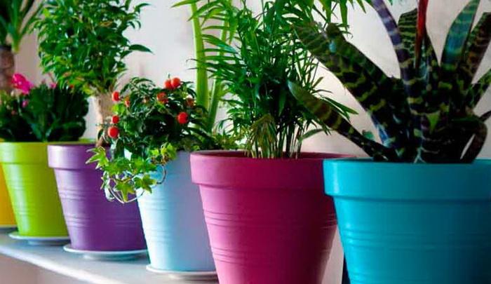 Остывшей водой можно полить комнатные растения.