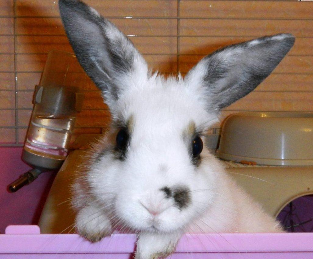 Какое животное самое милое? Грациозное и красивое? Правильный ответ: крольчиха Яха (но не её муж)