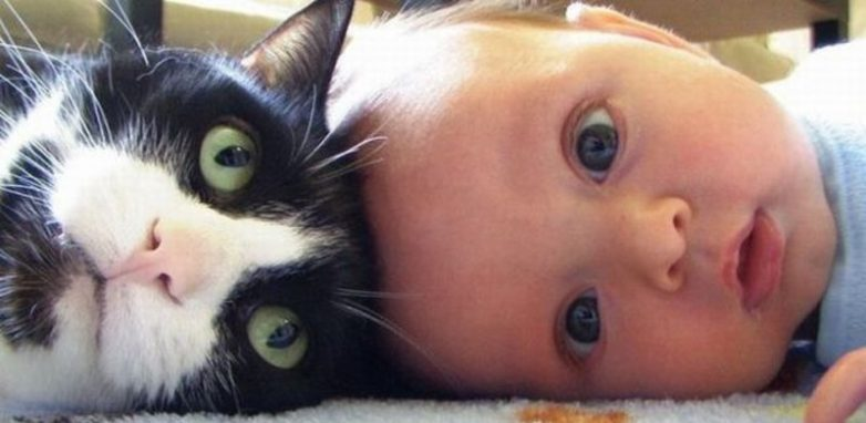 Почему каждому ребёнку нужен кот))