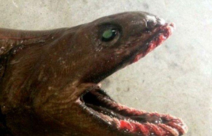 Рыбалка на доисторическую акулу