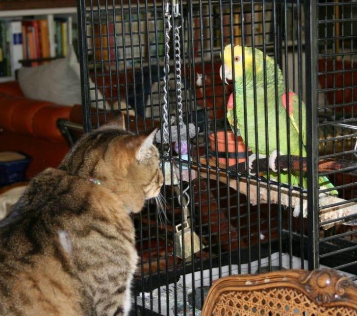 """""""Уйди, нечестивец!"""" — история об изощренной мести коту. Факт, большого ума попугай оказался!"""