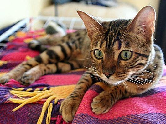 Распространённые мифы о кошках
