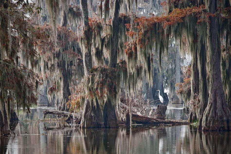 Кипарисовый лес на озере Каддо