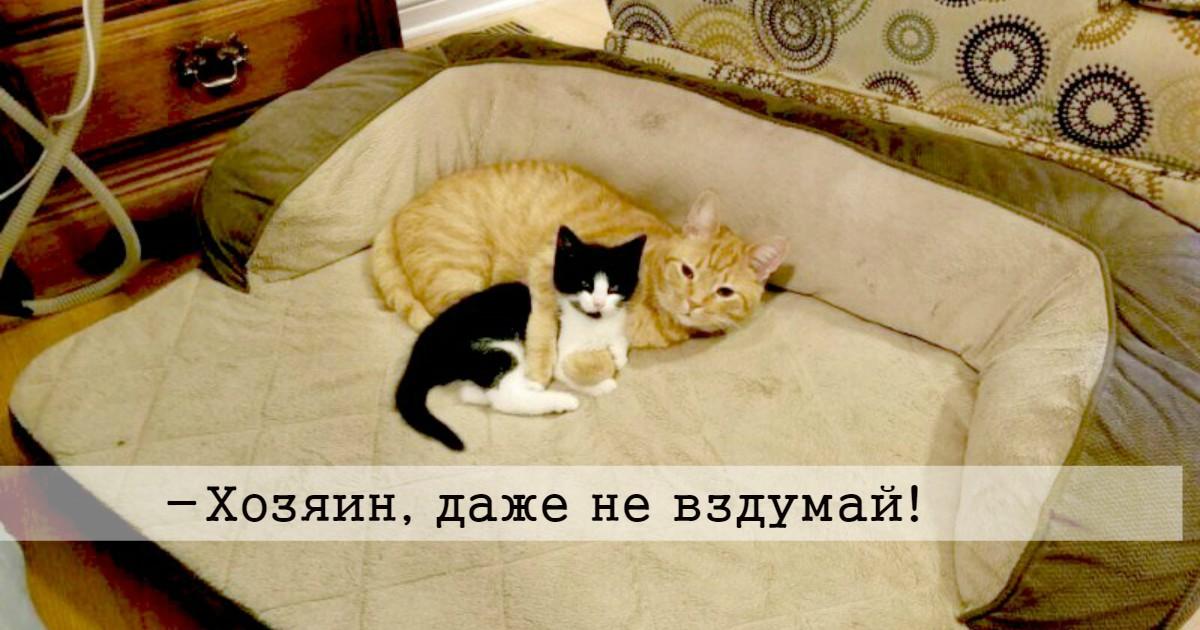 Случайный прохожий подобрал котёнка и стал ему искать новых хозяев… Но его рыжий кот всё решил по-своему