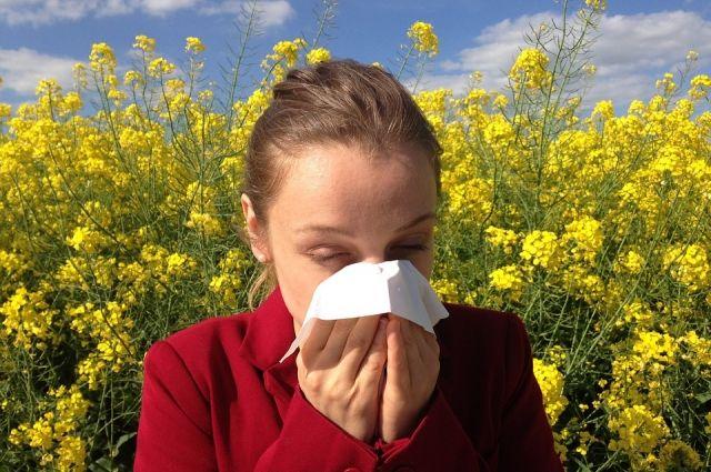 Яндекс создал карту для аллергиков